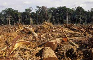 deforestazione-wwf