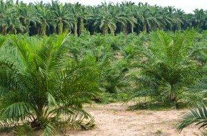 deforestazione in indonesia
