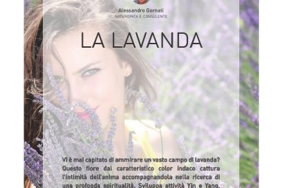 La Lavanda