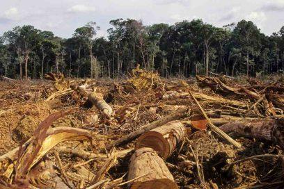 Emds contro la deforestazione
