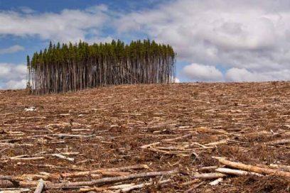 Deforestazione dell'Indonesia per palma da olio